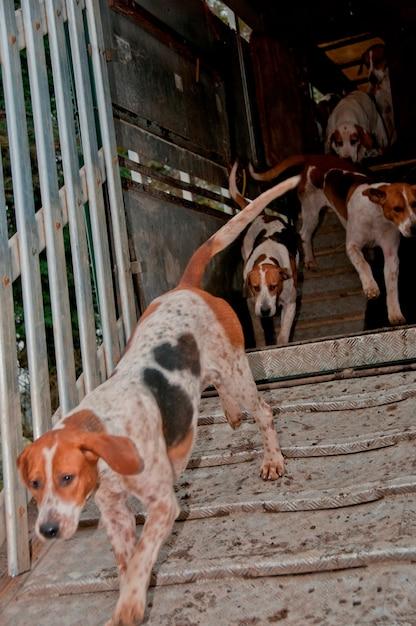 Jauría de perros Foto Premium