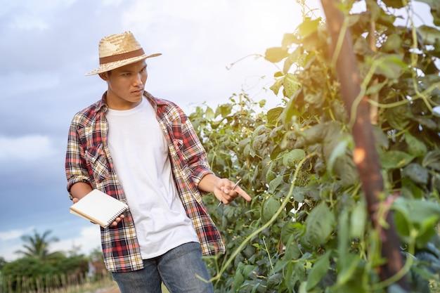 Joven agricultor asiático comprobando su planta o vegetal Foto Premium