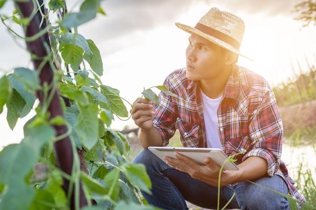 Joven agricultor asiático usando tableta y comprobando su planta o vegetal Foto Premium