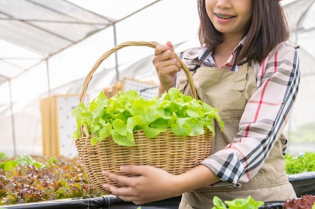 Joven agricultor orgánico de hidroponía asiática recogiendo ensalada de verduras en la cesta Foto Premium