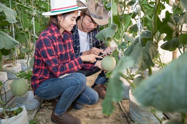 Jóvenes agricultores están analizando el crecimiento de los efectos del melón en granjas de invernadero. Foto gratis