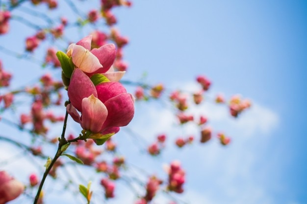 Resultado de imagen de fotos de primavera gratis