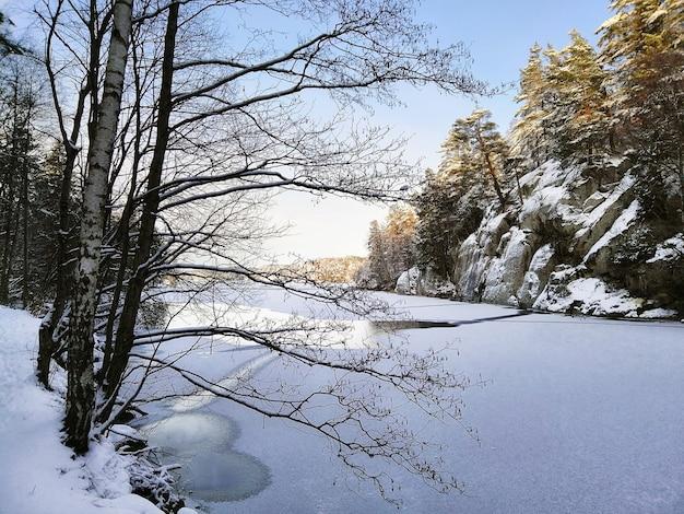 Lago congelado rodeado de rocas y árboles cubiertos de nieve bajo la luz del sol en larvik en noruega Foto gratis