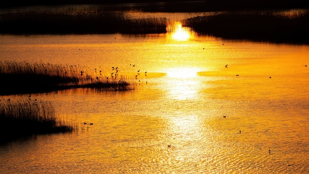 Lago con múltiples garzas al atardecer con luz amarilla reflejada en la superficie del agua en moldavia Foto gratis