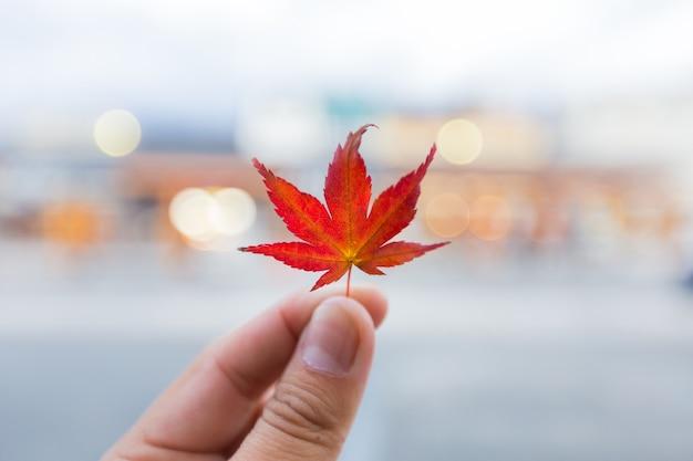 Las hojas de otoño cambian de color en el invierno | Descargar Fotos ...