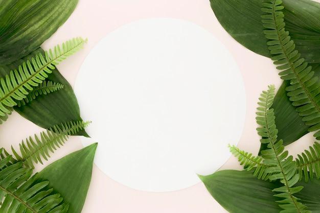 Lay flat de hojas y helechos con espacio de copia Foto gratis
