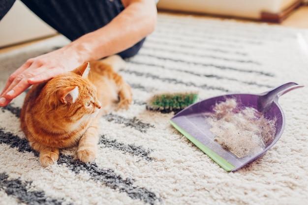 Limpiar la alfombra del pelo de gato con un cepillo en casa. el hombre limpia la alfombra sucia y pone la piel de los animales en primicia. Foto Premium