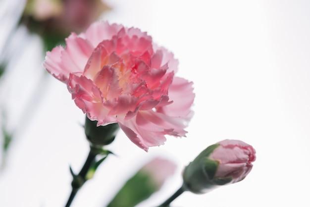 Lindas Flores Rosas Descargar Fotos Gratis