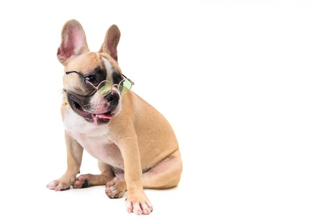 Lindo bulldog francés usar gafas y sentado aislado Foto Premium