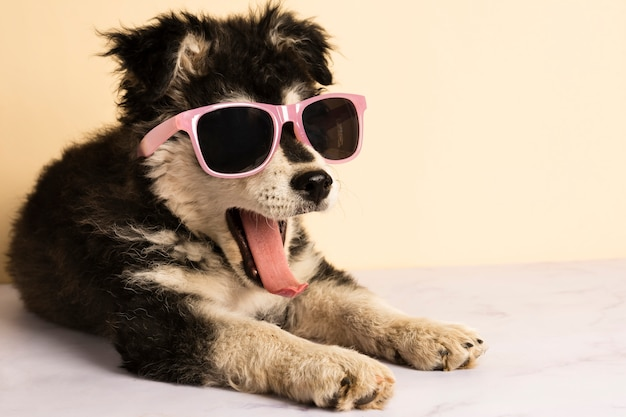 Lindo cachorro con gafas de sol bostezando Foto gratis