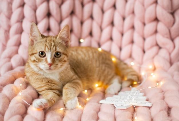 Lindo gatito de jengibre que pone en una suave manta de punto gigante de lana merino de color rosa pastel, c Foto Premium