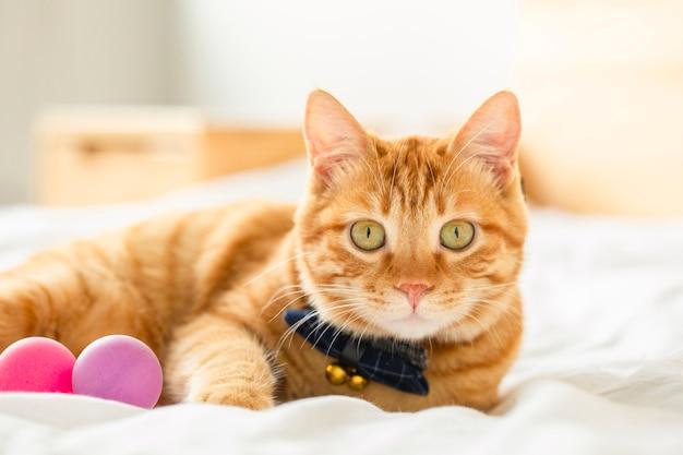 Lindo gato descansando Foto Premium