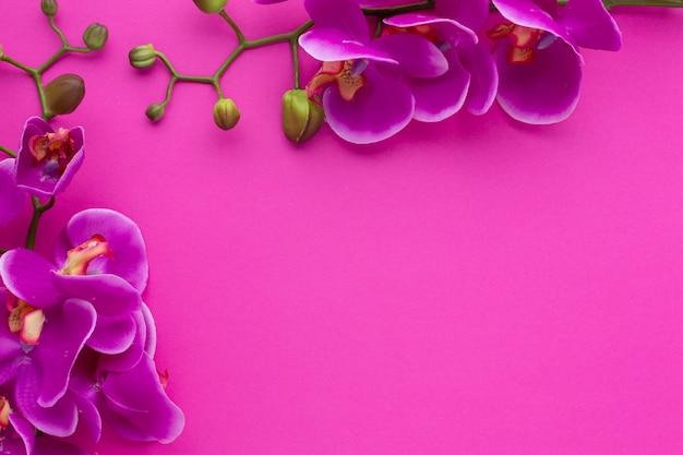 Lindo marco con copia espacio fondo rosa Foto gratis