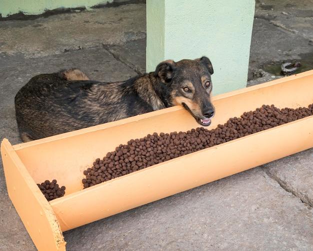Lindo perro junto a la comida a la espera de ser adoptado. Foto gratis