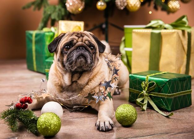 Lindo perro parado en el piso mirando los regalos Foto gratis