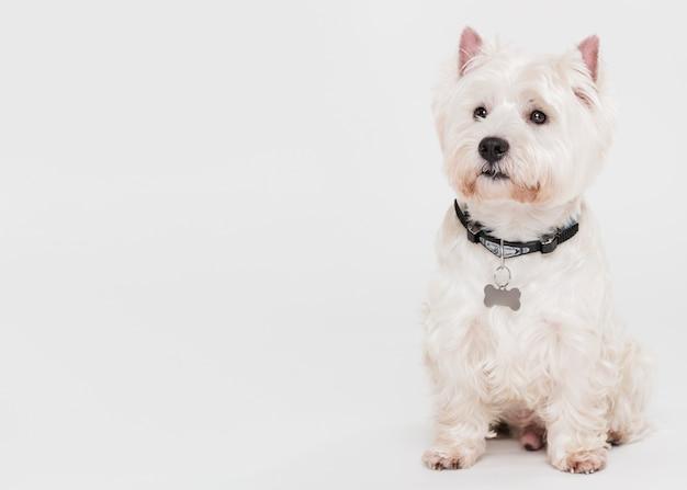 Lindo perro pequeño sentado Foto gratis
