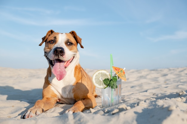 Lindo perro en la playa y una copa de cóctel frío. Foto Premium