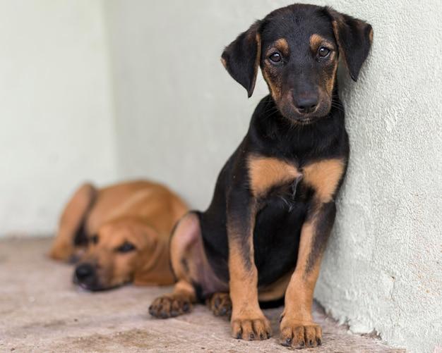 Lindos perros de rescate en el refugio esperando ser adoptados Foto Premium