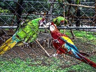 loros zoológico, la naturaleza Foto Gratis