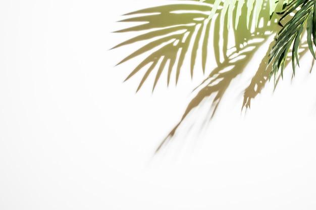 Luces verdes hojas reflexiones sobre fondo blanco Foto gratis