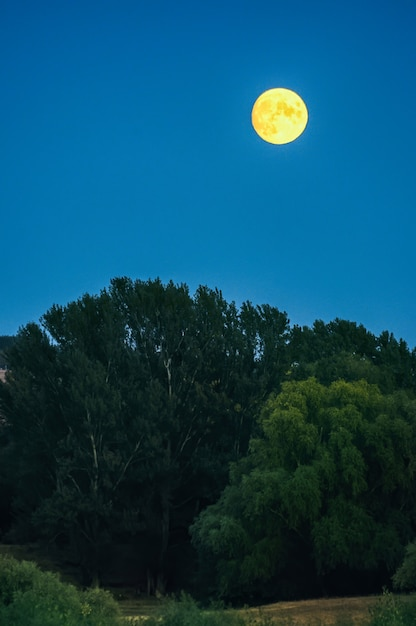 Luna llena amarilla en un cielo azul Foto gratis