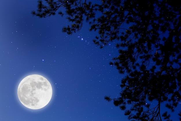 Luna llena estrellada sobre ramas de pino. noche romantica. Foto Premium
