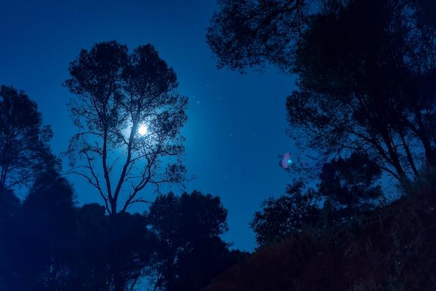 Luz de la luna detrás de un árbol alto Foto gratis
