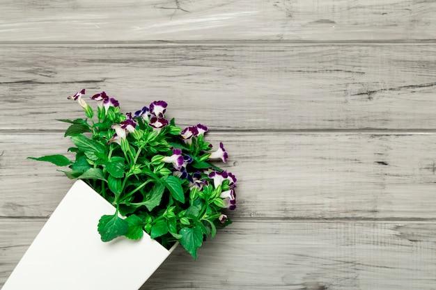 Maceta blanca con hermosas flores moradas Foto gratis