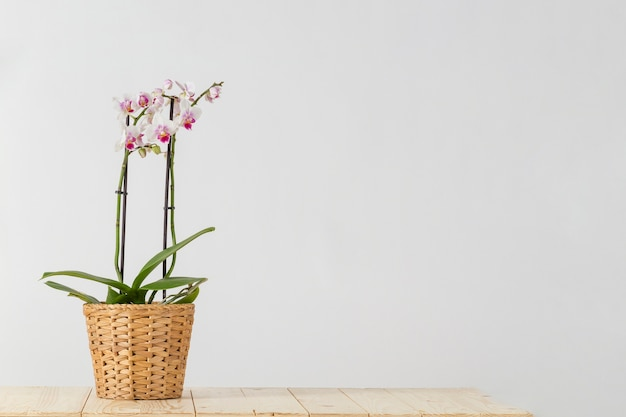Macetero de mimbre con orquídeas Foto gratis