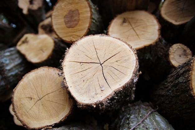 La madera cosechada en el invierno. primer plano de troncos. Foto Premium