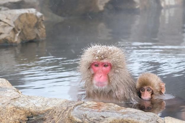 Madre Japonesa Y Monos De La Nieve Del Bebé En Baño Termal Natural