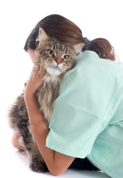 Maine coon cat un veterinario Foto Premium