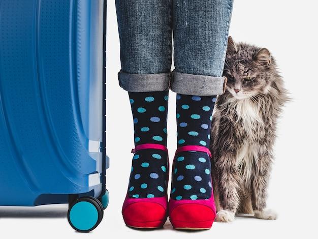 Maleta con estilo, piernas de mujer y gatito suave. Foto Premium