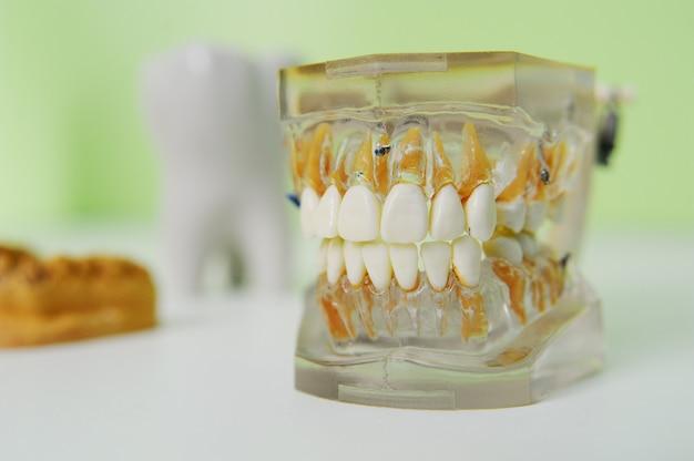 Mandíbula artificial sobre la mesa en el consultorio del dentista. Foto Premium