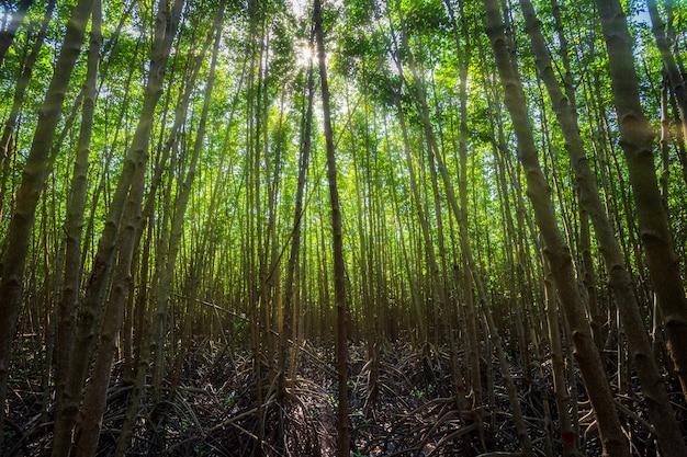 El mangle del bosque en chanthaburi tailandia. Foto Premium