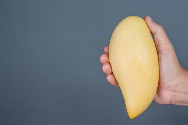 Mango de mango en el fondo gris. Foto gratis