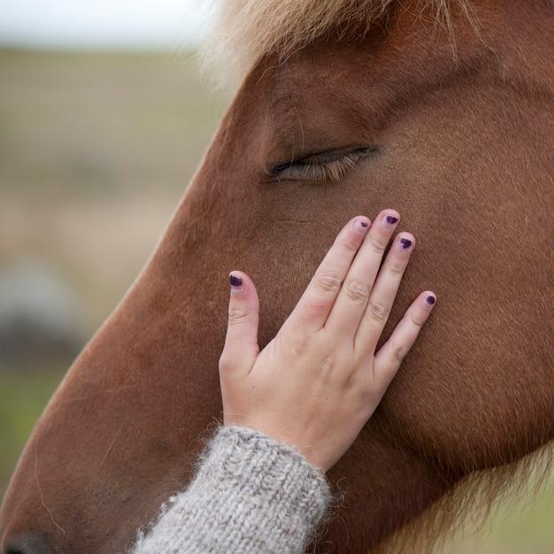 ===la caricia de una mano=== Mano-acariciando-cara-caballo-islandes_19485-32656