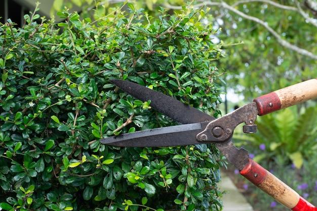 Mano en cortar el arbusto Foto Premium