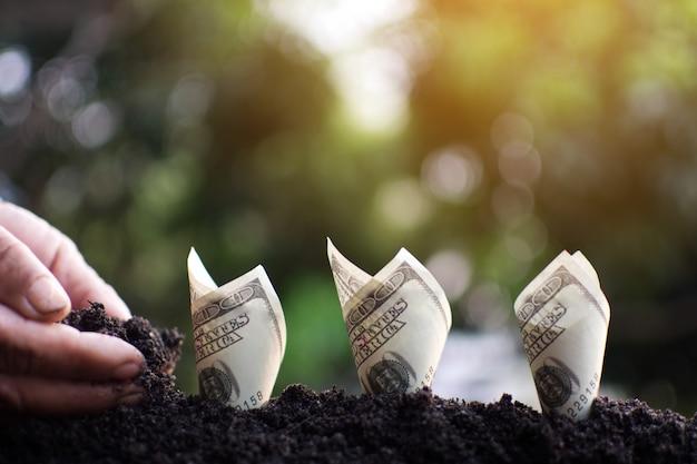 Mano humana plantando dinero para el éxito. Foto Premium