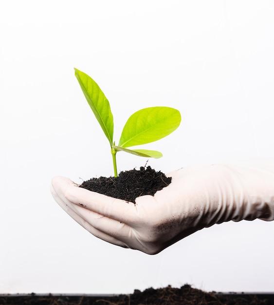 La mano del investigador usa guantes de goma sosteniendo una planta verde joven con suelo negro fértil en la palma Foto Premium