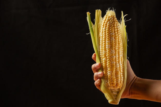 La mano del maiz Foto gratis