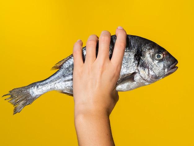 Mano con pescado fresco sobre fondo amarillo Foto gratis