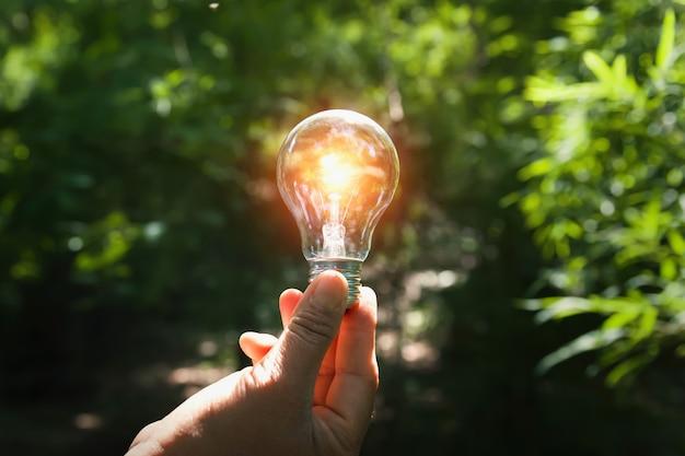 Mano que sostiene la bombilla con sol en el bosque Foto Premium