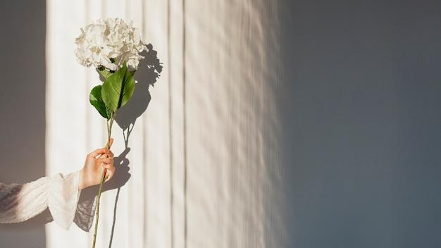 Mano que sostiene la flor blanca de la primavera Foto gratis