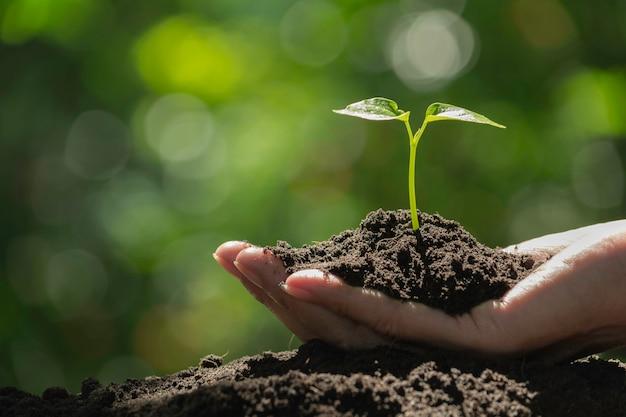Mano que sostiene una planta verde y pequeña. plantas frescas verdes en fondo de la naturaleza. Foto Premium
