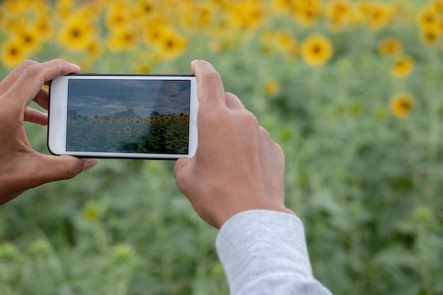 Mano con un smartphone tomando foto de girasoles. Foto Premium