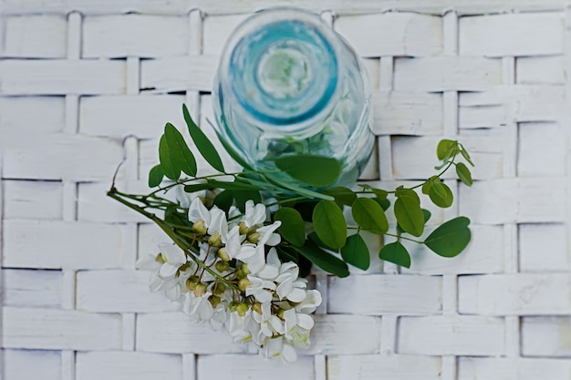 Manojo de acacia de flores blancas cerca de la botella de la medicina. colección de hierbas en temporada. ramas de langosta negra, robinia pseudoacacia, falsa acacia. medicamentos de plantas medicinales. Foto Premium