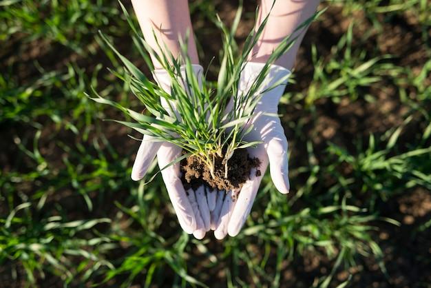 Manos del agricultor sosteniendo cultivos con suelo fértil en el campo Foto gratis