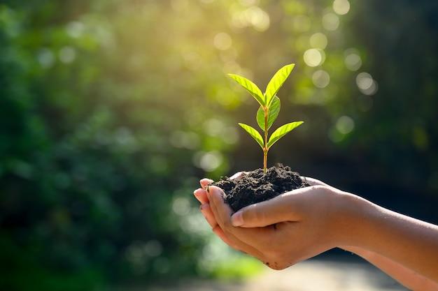 En manos de árboles que crecen plántulas. Foto Premium