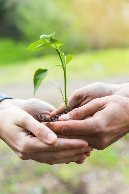 Manos de cultivo con árbol joven Foto gratis